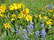 Wildflower explosion.