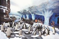 Visit the brand new SeaWorld Orlando's Antarctica: Empire of the Penguin™ with Smart Destinations