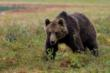 Avoid encounters with bears this summer.