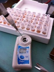 lobster blood sample ATAGO PAL Brix refractometer