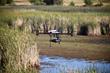 Draganflyer X4-ES Wildlife Eco Survey