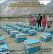 """PISA partnered with the Hashoo Foundation to help the """"Plan Bee"""" beekeepers affected by the floods in Northern Pakistan. The students donated 79 beehives and helped 21 beekeepers rebuild their honey e"""