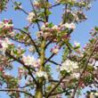 English Woodlands Promoting Range of Late-Spring Flowering Trees, Plants and Shrubs