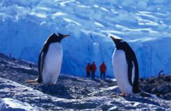 antarctica cruises, ocean nova,