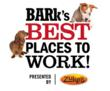 Bark's Best Places to Work