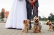 Pet Sitters International Offers Tips for Couples Planning to Include...
