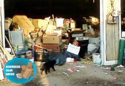 animal hoarders help