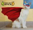 East Bay SPCA Celebrates Adopt-a-Cat Month in June by Elevating Cats to Superhero Status to Help Them Find Loving Homes