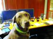Companies Have Good Reasons to Embrace Dog-Friendly Workplace
