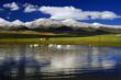 Swan Lake in Ili