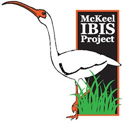 McKeel IBIS Project