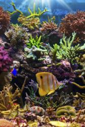 Portland-Aquarium