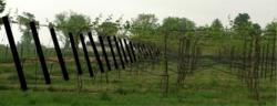 Recycled Plastic Vineyard Posts