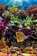 Austin-Aquarium