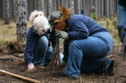 Alcoa employees volunteer during a Partnership for Trees Program project in Michigan.