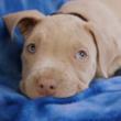 fence factory pet adoption