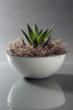 Handcast using a custom concrete mix, this Brandywine planter is ultralight and thin, yet durable
