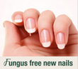 Zeta Clear, Most Powerful & Natural Nail Fungus Treatment, Now...