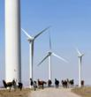 Palo Alto Supplier--Shiloh Wind Farm