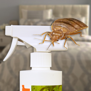 Study Identifies Most Effective Natural Bed Bug Killer