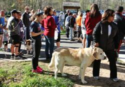Olde Towne Pet Resort and fitness apparel store Metro Run and Walk recently partnered to raise both funds and important awareness for homeless pets in the Northern Virginia area by organizing a local run and walk event named Break a Sweat for a Homeless P