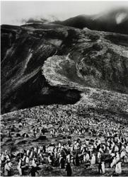 Sebastiao Salgado, Penguins, Deception Island