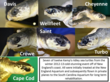 A Big Send-off for Seven of the Most Endangered Sea Turtle Species Rehabilitated at the South Carolina Aquarium