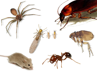San Antonio Residents Receives Pest Control Tips My