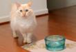 "Cubby with the new PawNosh ""Cubby"" glass pet food bowl that is non-toxic, made from 100% recycled glass, and made in USA"