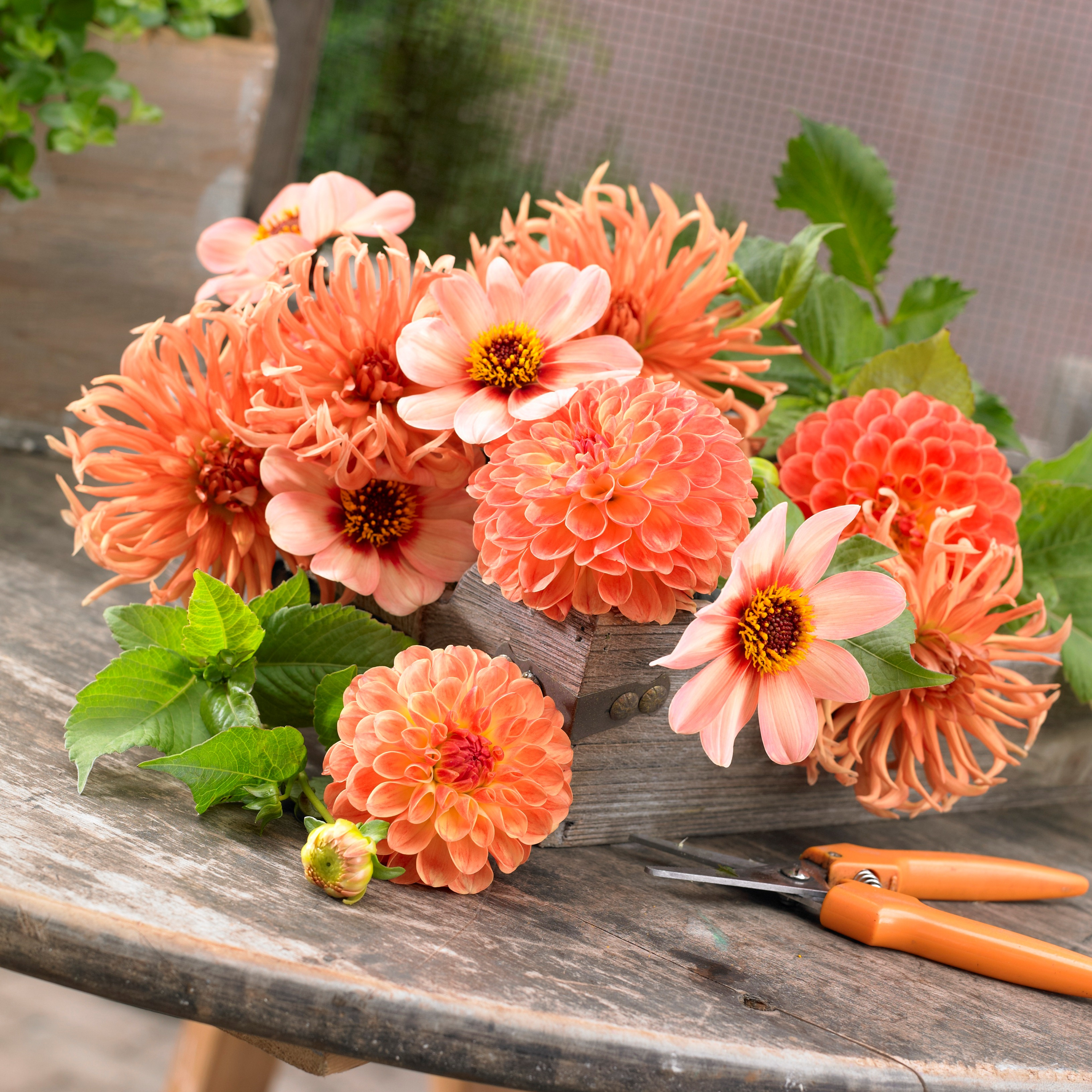 Tips For Growing A Cutting Garden To Create Gorgeous Bouquets