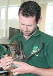 Blackpool Zoo's hand-reared wallaby with Adam Kenyon