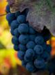 Sonoma Valley winery Starlite Vineyards releases new 2009 Cabernet Sauvignon wine.