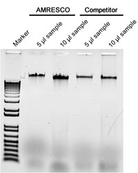 Genomic DNA was isolated from 8 x 10e7 Saccharomyces cerevisiae.  The DNA pellets obtained with both kits were suspended into equal final volumes and then 5 µl and 10 µl volumes were loaded onto an agarose gel for comparison.