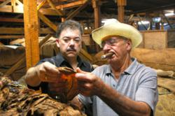 perdomo cigars, tobacco farming