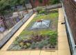 New York Green Roofs Semi-intensive Section at The Point