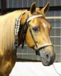 Gentle dispositioned Stallions of the Missouri Fox Trotting Horse competed for the title of Super Horse ,