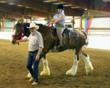 Rick Gates show manager assisting Special Needs Riders