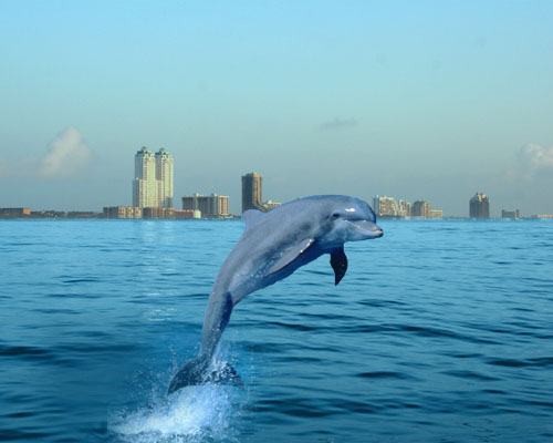 Marble Media Llc S Online Coastal Travel Blog Bydabeach Com Takes A Look At South Padre Island