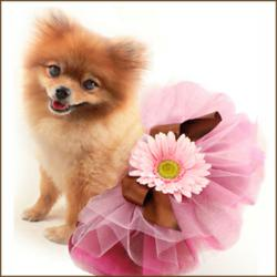 pink-dog-tutu-with-brown-ribbon-bow-and-pink-flower