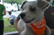 ASPCA Reaches Major Milestone, Completes Work in The Carroll Petrie Foundation Dog Rescue Project