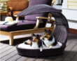 Outdoor Dog Chaise Lounger by RefinedKind Pet Products