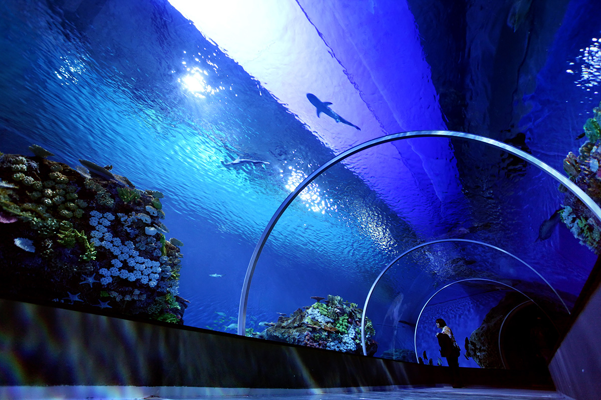 Blue Planet Aquarium Reopens To Become Northern Europe S