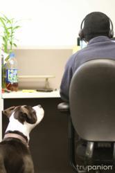 dog, pet-friendly workplace, pet-friendly office, office, desk