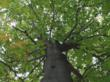 ArborSystems Product Ranked Excellent in Managing Beech Bark Disease by Michigan State University Study