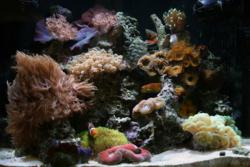 If temperature fluctuations go unnoticed by saltwater aquarium keepers, they can cause stress or even death to delicate, fish, corals and marine invertebrates.