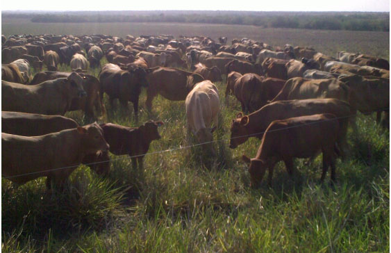 Sustainable Ranching Revolution Comes To America With