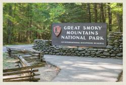 There are family-friendly things to do in the Smoky Mountains galore, including hiking, fishing, picnicking and wildlife sightseeing.