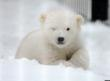 Local Law Firm Supports Buffalo Zoo's New Polar Bear