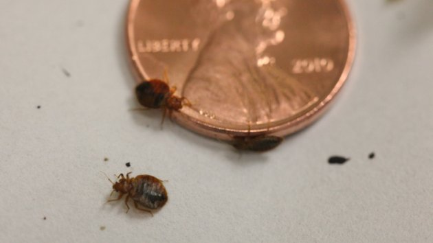 Bed bugs found in north bay hospital39s emergency room my for Bed bug litigation