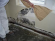 Important Tips and Advice about Mold Damage by ServiceMaster by Singer